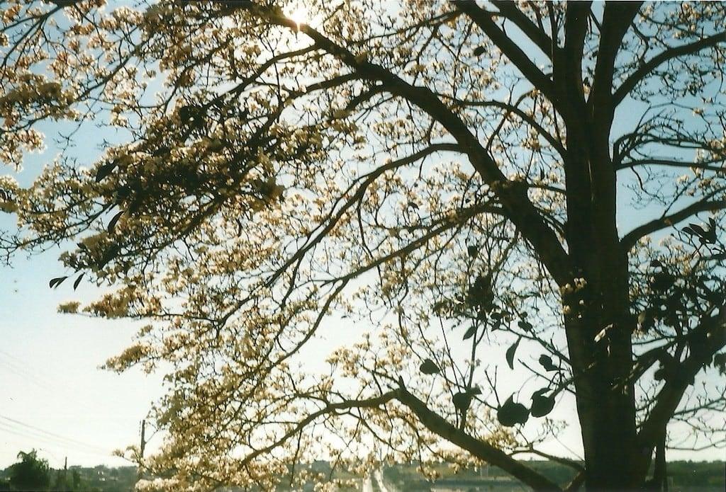 Foto analógica feita com uma Olympus Trip 35 + Filme Kodak ColorPlus ISO 200 (acesse o blog para mais fotos) #olympustrip35 #35mm #analogisnotdead