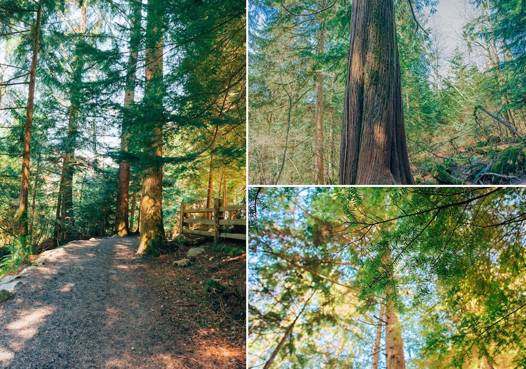 Shannon Falls Provincial Park! Saiba mais sobre esse passeio, clique para ler! #Vancouver #ShannonFalls #Vancouver #SeaToSky