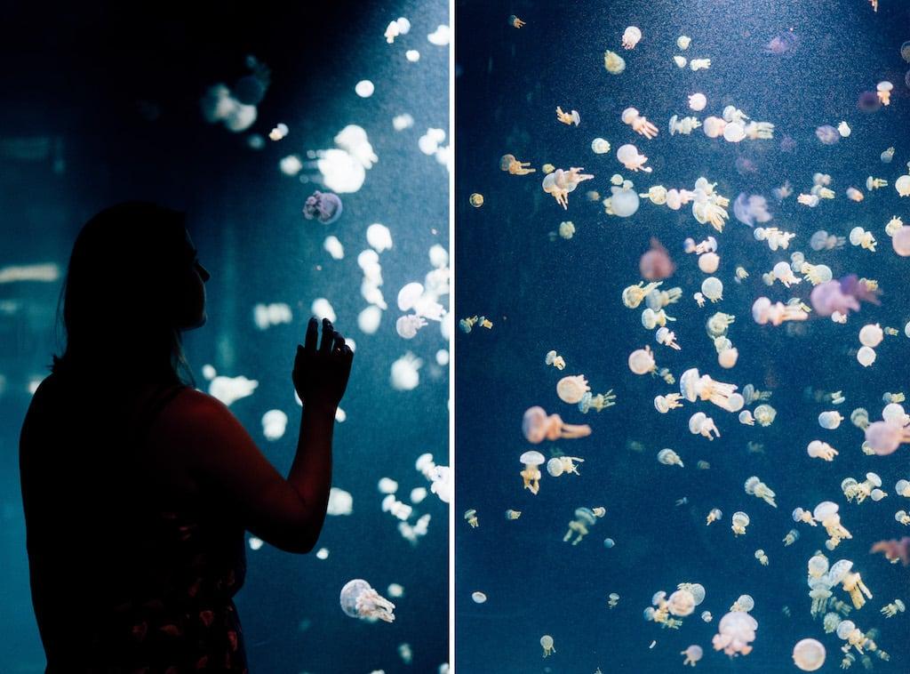 O Vancouver Aquarium fica localizado no Stanley Park e vale a visita, principalmente se estiver acompanhado de crianças. Saiba mais sobre o lugar clicando para ler! #fish #Vancouver #PasseioemVancouver
