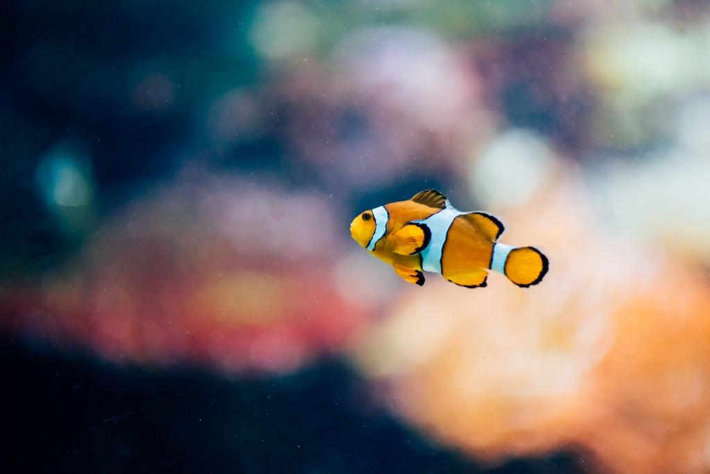 É você, Nemo? Saiba mais sobre um passeio cheio de vida marinha no Stanley Park, clique para ler! #DicasdePasseios