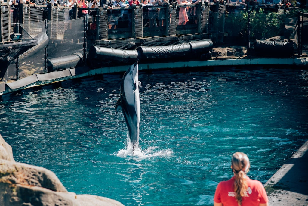 A apresentação da golfinho Helen é um dos momentos mais aguardados no Vancouver Aquarium. Saiba mais sobre esse lugar clicando para ler. #VancouverAquarium #Golfinho #Vancouver