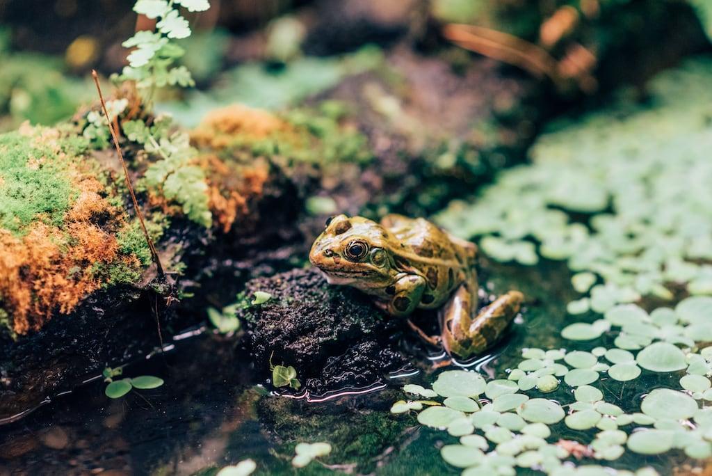 Sapos coloridos? Saiba mais sobre um passeio cheio de vida selvagem no Stanley Park, clique para ler! #DicasdePasseios
