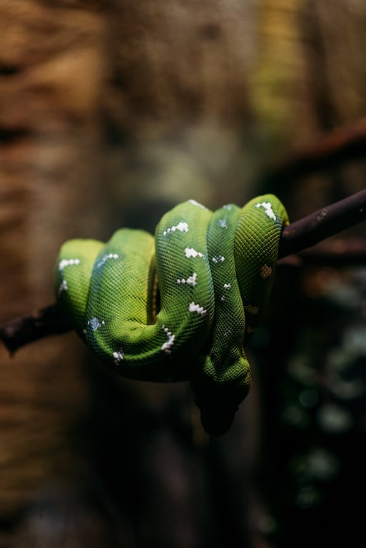 Cobra verde! Conheça mais sobre um passeio cheio de vida marinha no Stanley Park, clique para ler! #DicasdePasseios