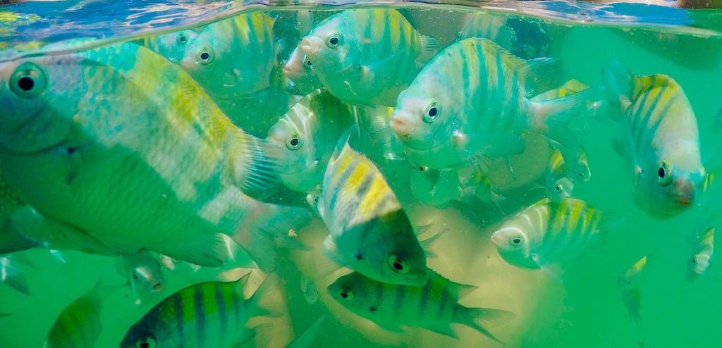 Os peixes e as água esverdeada do Atlântico num passeio de Catamarã em João Pessoa!Saiba mais no link! #jampa