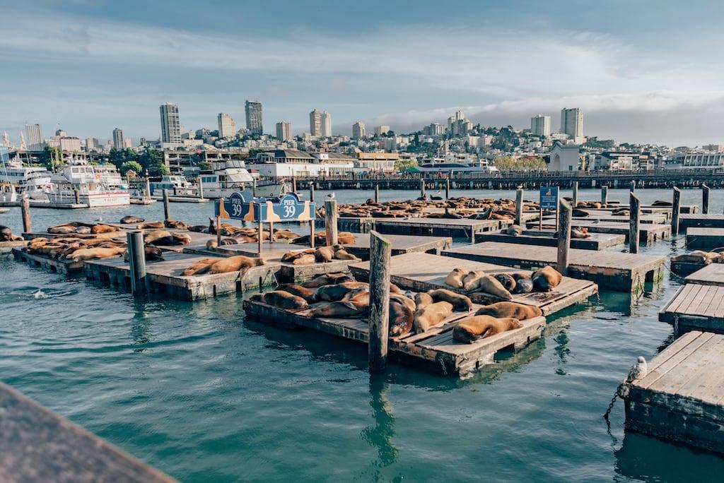 Leões marinhos tomam sol no Píer 39 em San Francisco. #pier39 #SanFrancisco