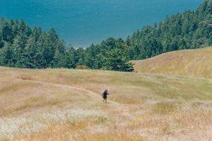Pequenina no Mount Tamalpais. lugar excelente para uma aventura nos arredores de San Francisco. Clique para saber mais! #MountTamalpais #SanFrancisco #Nature