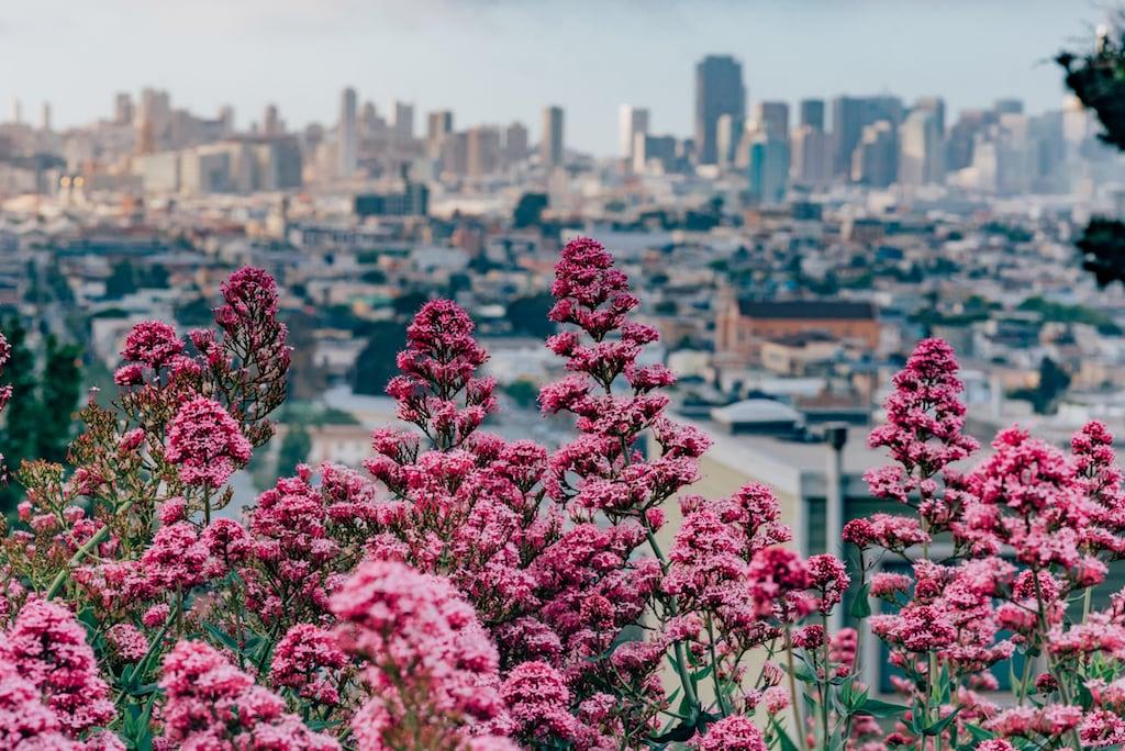 Flores no morro com uma vista para a cidade!Veja mais fotos desse pedacinho de San Francisco clicando no link!