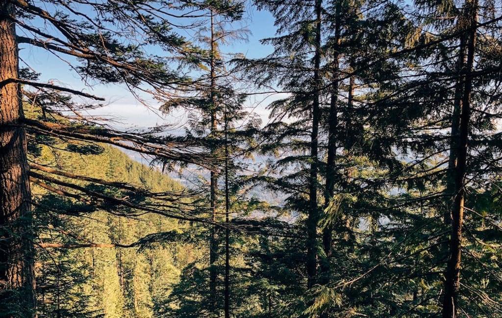 A vegetação da floresta ao redor da trilha. Veja mais fotos no blog!