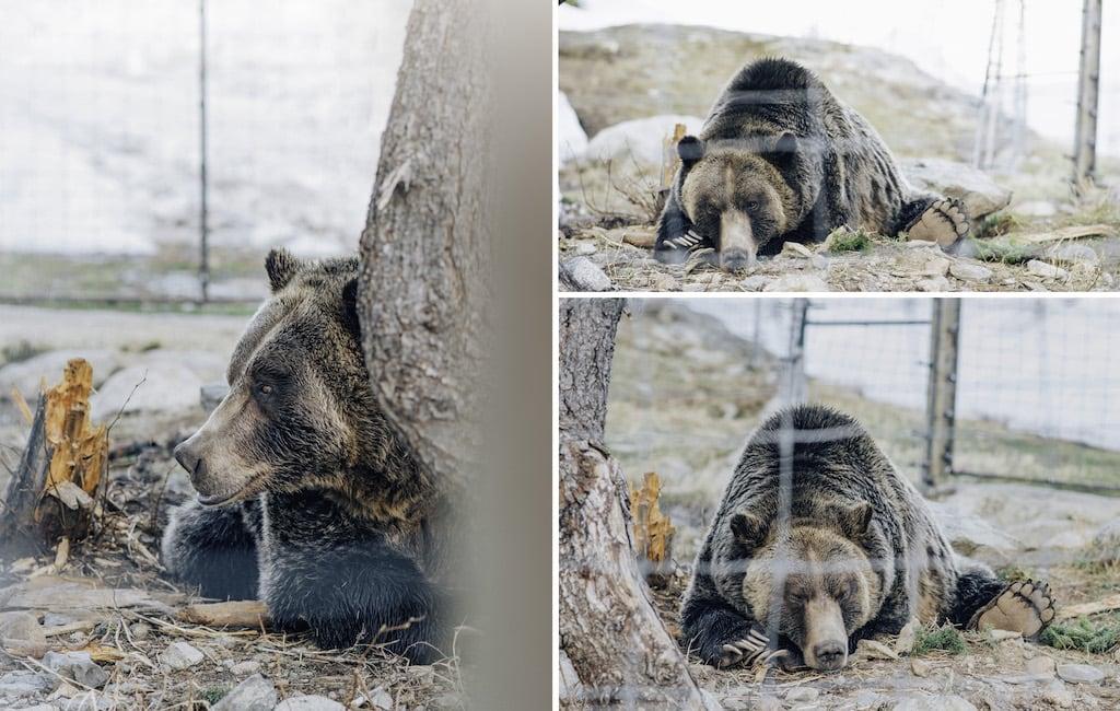 Urso morador da montanha. Para ter a oportunidade de observar esses animais foi preciso muita força de vontade e perseverança ao percorrer a trilha que leva até o topo! Veja mais fotos no blog.