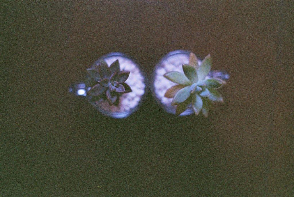 Veja mais fotos analógicas no post! São retratos, flores, objetos!