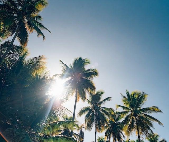 Os coqueiros fazem sombra na areia, ás aguas são claras e quentes, o tempo está sempre agradável. Conheça esse paraíso no litoral sul de João Pessoa!