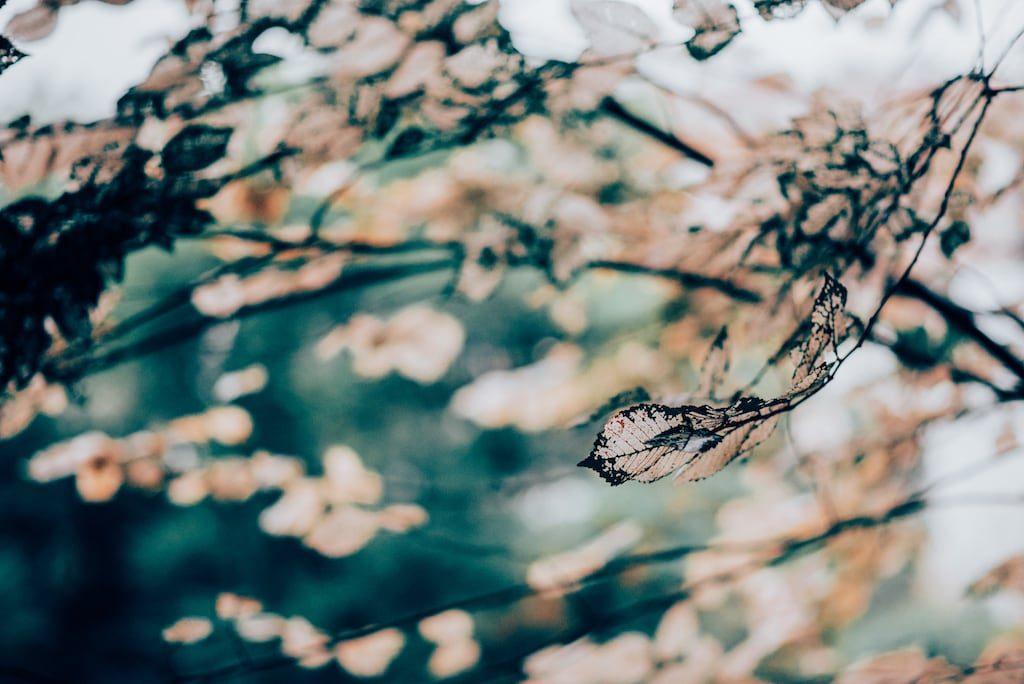 Veja práticas simples para melhorar seus cliques de natureza durante suas viagens! Post ilustrado com muitas fotos. Imagens disponíveis para wallpaper.