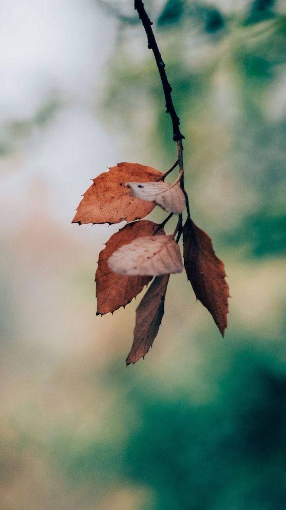 Folhas de outono alaranjadas. Quer saber como captar a natureza durante suas viagens? Veja dicas no post!