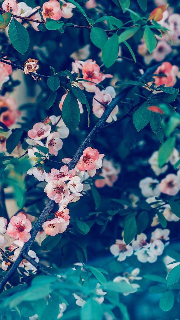 Veja dicas para fotografar flores e folhas durante suas viagens! Tudo para produzir imagens de qualidade e belas recordações. Acesse o link!