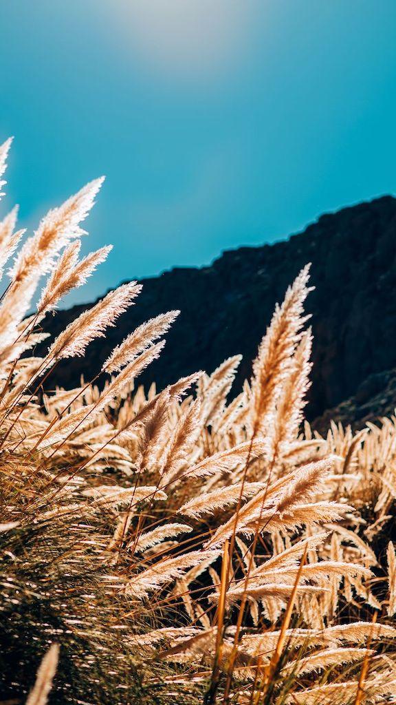 A bela vegetação do deserto! veja mais fotos de natureza no link. Imagens disponíveis para uso como wallpaper de celular.