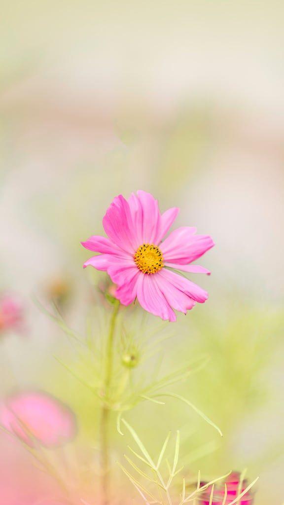 Dicas para fotografar flores e folhas durante suas viagens. Aprimore seu olhar e conquiste imagens de qualidade e belas recordações!