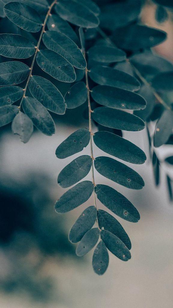 Macro de folhas verdes. Veja mais imagens de natureza no link!