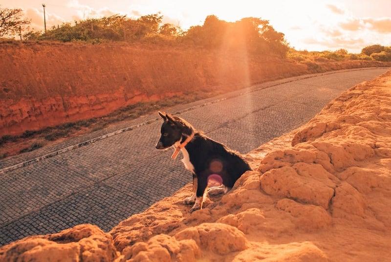 Esse simpático cachorrinho nos fez companhia enquanto observávamos um lindo mirante. Saiba mais sobre esse lugar no post.