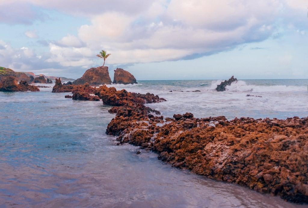 O coqueiro que nasceu sobre uma rocha é símbolo dessa bela praia do litoral sul de João Pessoa. Clique para ler!