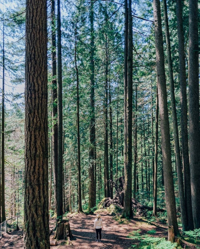 Conheça o Lynn Canyon Park em North Vancouver! Um passeio com trilhas, ponte suspensa, um belo rio de águas esverdeadas e muita natureza! Clique para saber mais.
