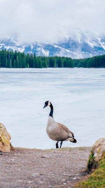 Two Jack Lake congelado. Veja nosso roteiro completo pelas Rocky Mountains!