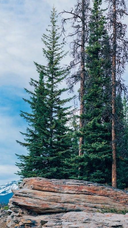 Vegetação típica dos parques nacionais do Canadá. Veja mais fotos no link!