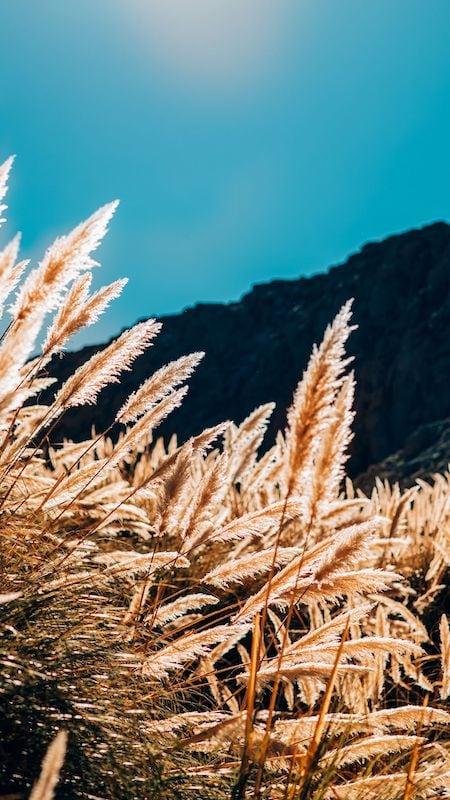 Vegetação dourada do Atacama.