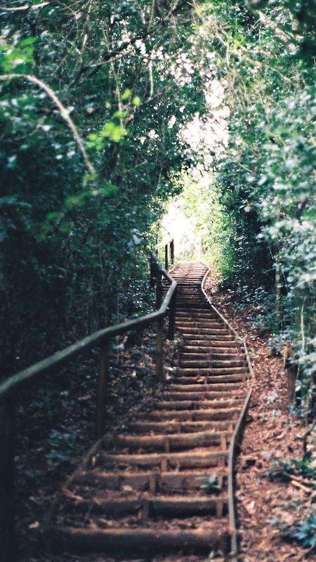 Wallpaper de escada na floresta, veja como baixar imagens do Pinterest para usar no seu celular!
