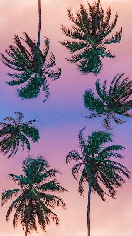 Wallpaper coqueiros