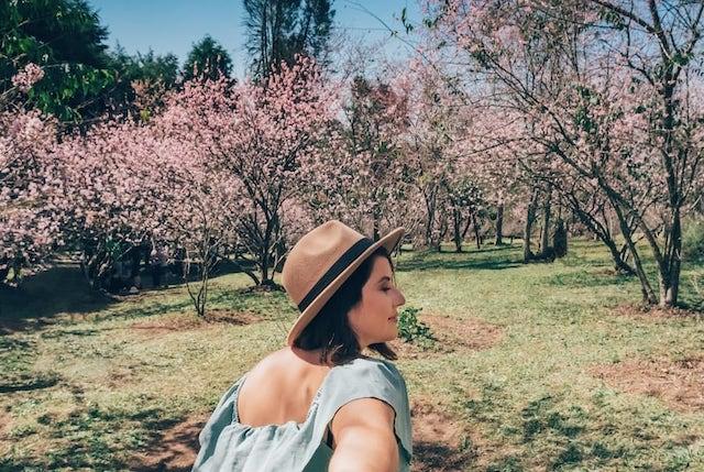 Bosque das Cerejeiras no parque do Carmo, em São Paulo, com suas árvores rosadas na floração.