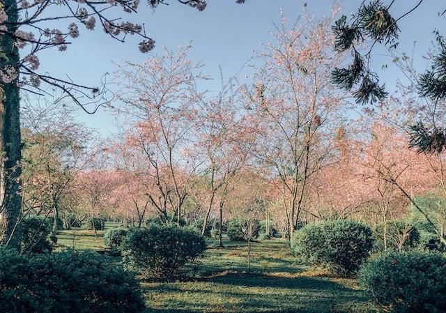 Imagem do bosque