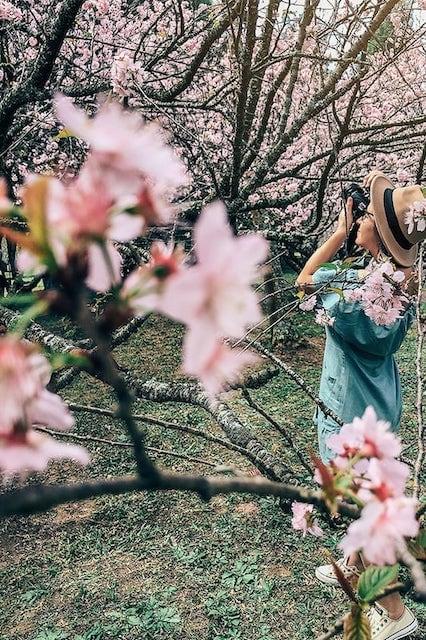 Fotografando entre as flores