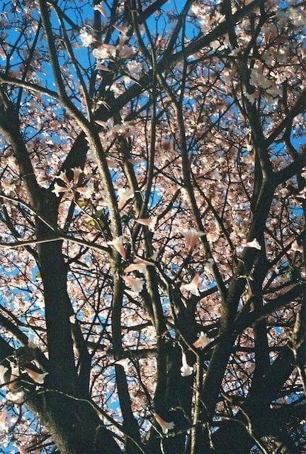 Fotografia analógica feita com uma câmera de meio-quadro. Clique para ver mais imagens!