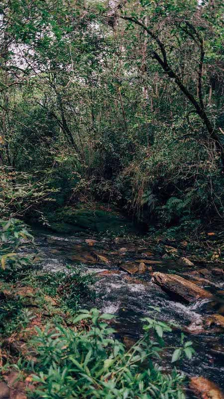 Um dos rios na trilha do vale. Veja esse passeio imperdível em Pirenópolis-GO!