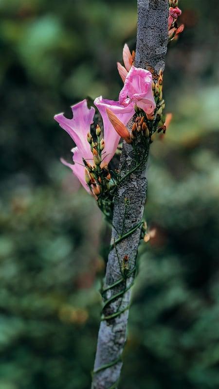 Flor do cerrado em meio a trilha do vale. Conheça mais desse lugar no link!