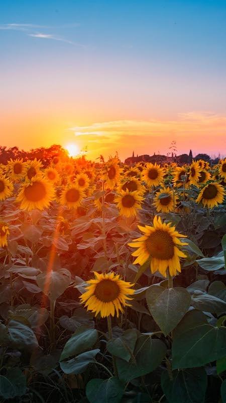 Use a luz dourada a seu favor! Veja 10 dicas para fotografar no pôr do sol! Clique para ler.