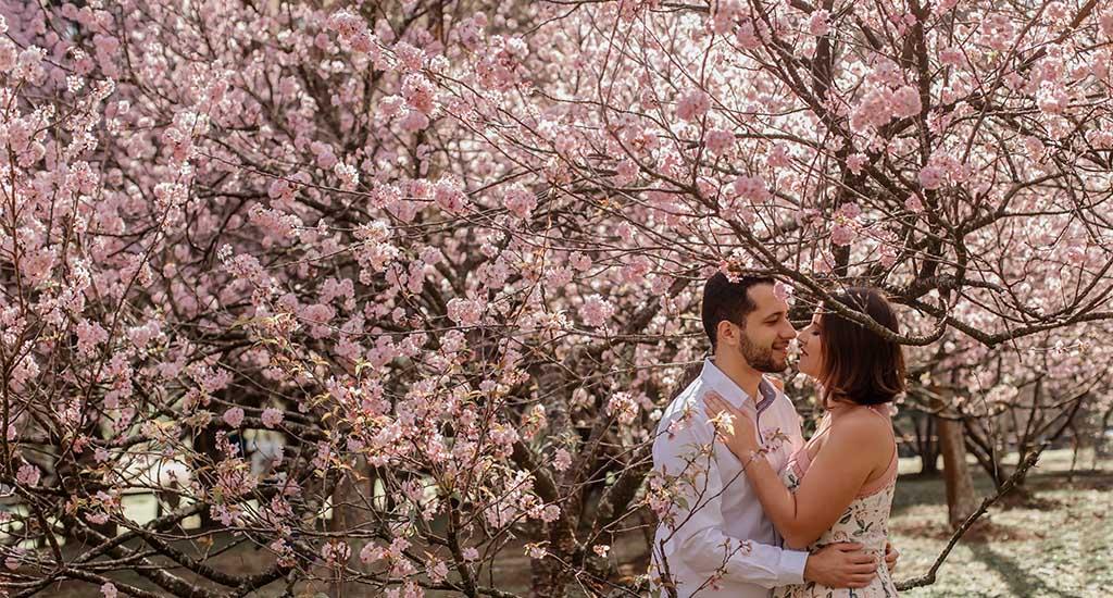 Ensaio fotográfico no Bosque das cerejeiras do parque do Carmo em São Paulo! Veja todas as fotos no link!
