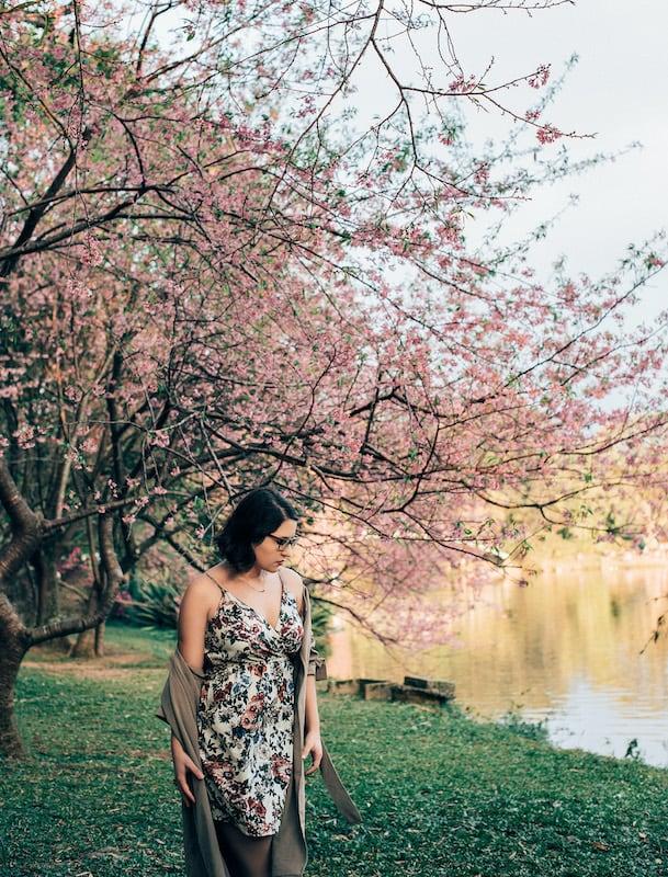 A florada das cerejeiras deixa esse famoso ponto de São Paulo ainda mais bonito! Clique para ver mais fotos.