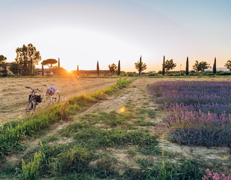 Nossas bicicletas estacionadas ao lado do campo de lavanda. Veja um ensaio fotográfico feito neste belo cenário!