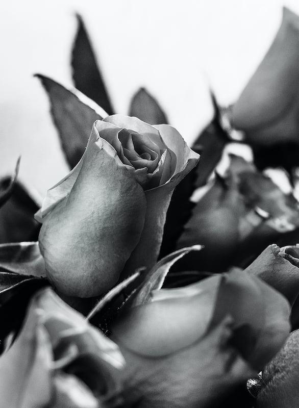 Macro de uma rosa. Veja mais imagens do nosso projeto 7 on 7 no link!