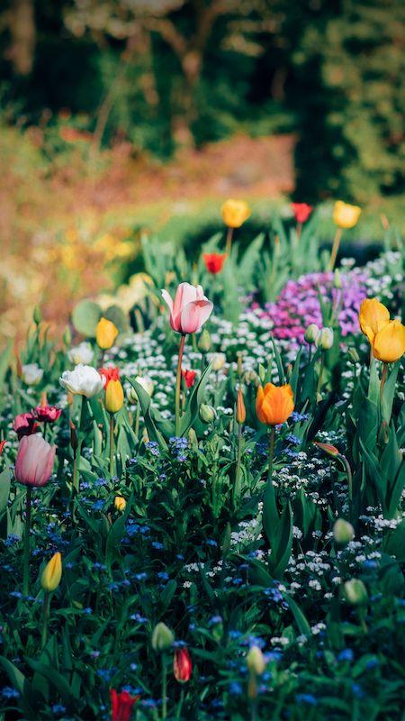 Os jardins do Queen Elizabeth Park em Vancouver.